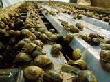 Héliciculture et ferme marine EISTM Bain-de-Bretagne