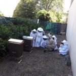 Ruches au collège Bain de Bretagne (10)
