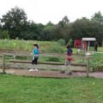 Journée intégration 6ème jardins de Brocéliande (14)