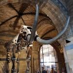 Musées londoniens (3)