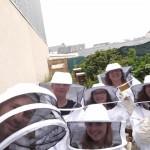 Pollinisateurs (1)