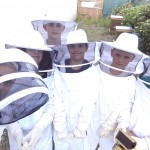 Pollinisateurs (2)