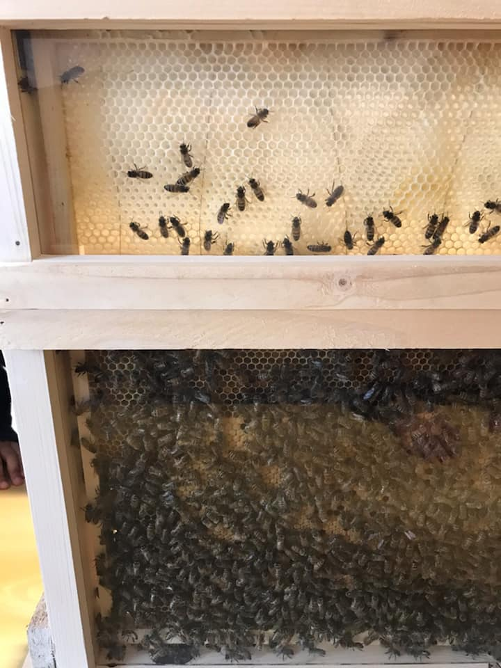 apiculteur collège Bain-de-Bretagne (4)