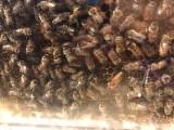 apiculteur collège Bain-de-Bretagne (5)