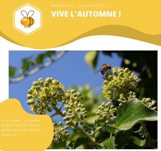 newsletter ruche